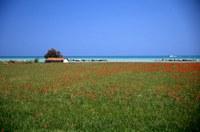 Roseto, panorama di Cologna