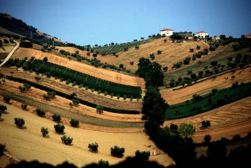 Vista dei campi - Mosciano