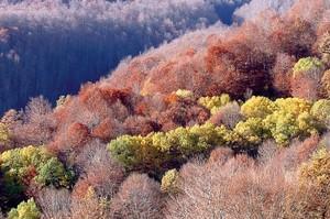 Il bosco di Cesacastina