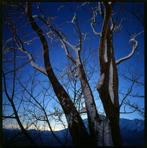 Alberi spogli in inverno