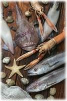 Adriatic Fish